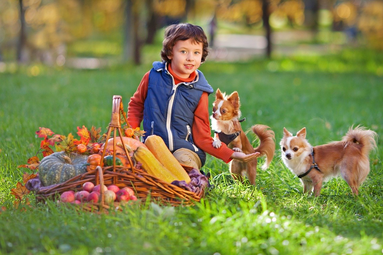 Pies, kot i niemowlę – wpływ psa i kota na rozwój dziecka.